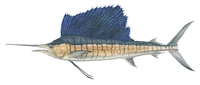 Sailfish, W/C (26 x 40)