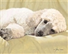Best Loved Breeds: Poodle, Oil (16 x 12)
