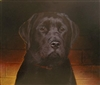 Black Lab, Oil (16 x 13.5)
