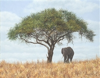Simon Combes Original Painting Old Tusker